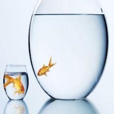 big-fish-small-pond x